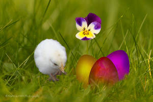 Happy Easter - Frohe Ostern by Martina-WW