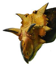 Xenoceratops (WIP, fragment) by Olorotitan