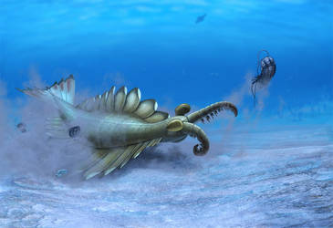 Anomalocaris canadensis by Olorotitan