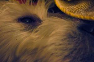 Oz - the sleepy dog by VioletteOwl