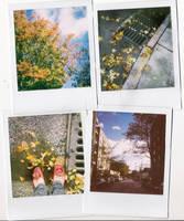 autumn by spicesandpop