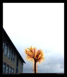 A burning tree in ... by dante2k