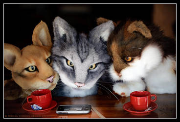 Lol Cats on the iPhone by BlueHyena