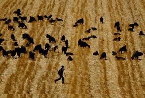 pastoral goat spots by fotoizzet