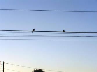 Birds against the sky by Kudoshido