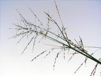 Tall weed - Part 2 by Kudoshido