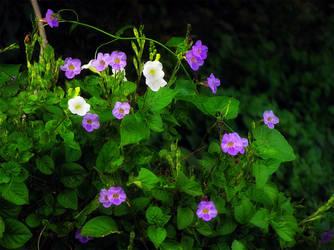 Purple in a Sea of Green by Kudoshido