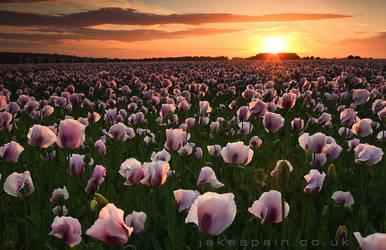 Opium Dreams..... by JakeSpain