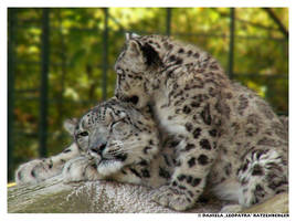 Lea and Lola by leopatra-lionfur