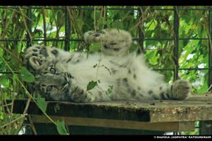 My Happymaker by leopatra-lionfur