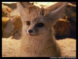 A Fox Face by leopatra-lionfur