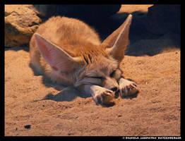 Sleepy Fox by leopatra-lionfur