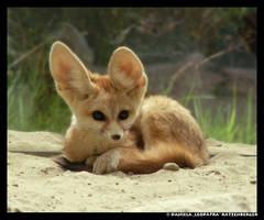 Fennec Cub by leopatra-lionfur