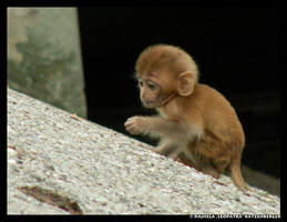 Baby Monkey by leopatra-lionfur