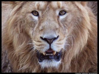 Loewe by leopatra-lionfur