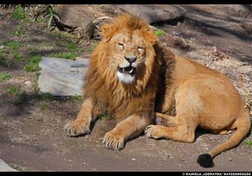 Hahaha by leopatra-lionfur