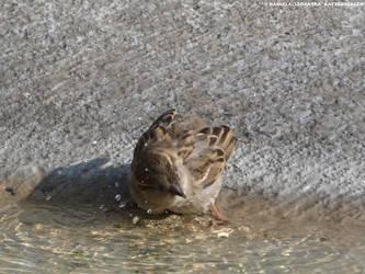 Waterbending by leopatra-lionfur