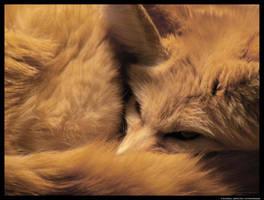 Fennec Close-Up by leopatra-lionfur