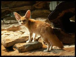 Fennec Posing by leopatra-lionfur