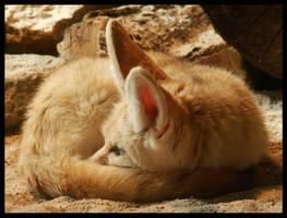 Fennec Furball by leopatra-lionfur