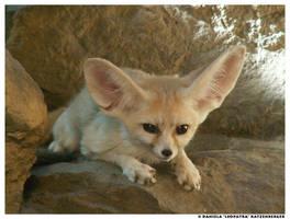 little fox by leopatra-lionfur