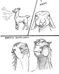 Drama-Llama by ferralsoul