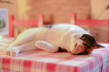 Sleepy cat by lsy199011