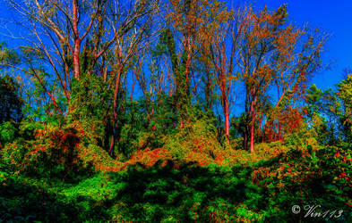 Tree line 3 by vin113