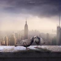 Pigeon Romance by simoneheld