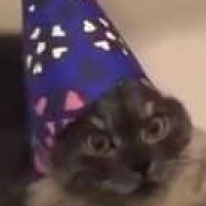 catofoz's Profile Picture
