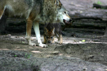 Female wolf with pup by VitaniFox85