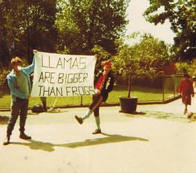 Llamas. by apami