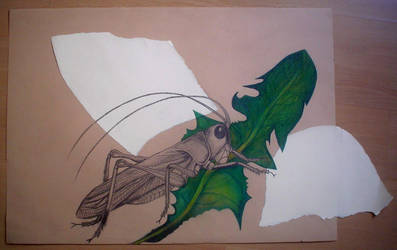 Grass-hopper by Hrbitovanda