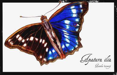 Butterfly 1 by Hrbitovanda