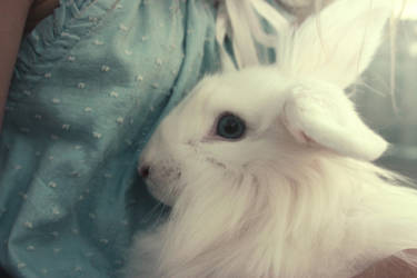Mr. White Rabbit by GirlWithARedBalloon