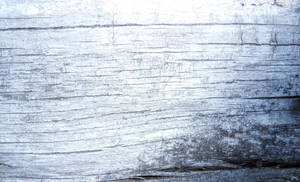 wood texture 15 by carlbert