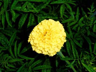 flower 06 by carlbert
