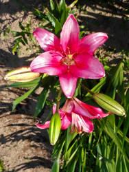 flower 08 by carlbert