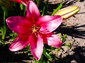 flower 09 by carlbert