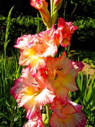 flower 13 by carlbert