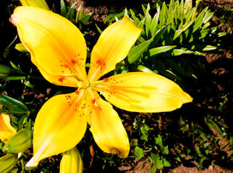 flower 16 by carlbert