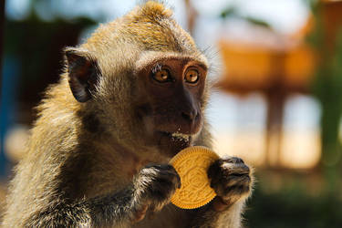 Monkey with cookies by Nizileva