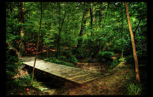 Calibre Woods by shuttermonkey