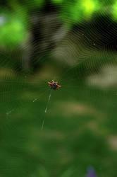 Spider Cay by shuttermonkey