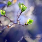 hopeful green by Lisa-Schneider