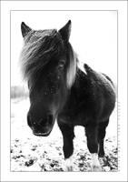 Horse by cptkangaroo