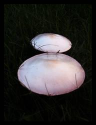 'shrooms by tenma-mouko