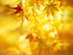Yellow Autumn by KevDog32