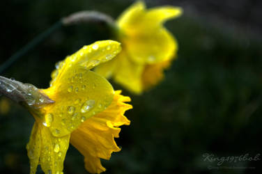 showers in spring by King1976Bob