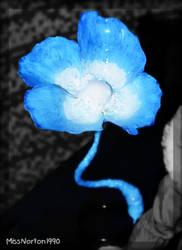 Echo-flower by MissNorton1990